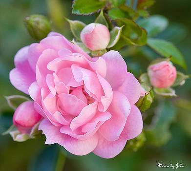 Pretty in Pink by John Holloway