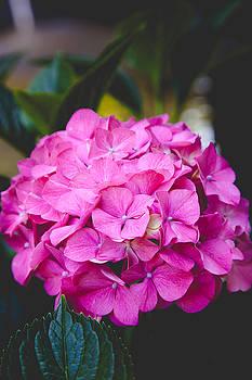 Pretty in Pink by Judy Wright Lott