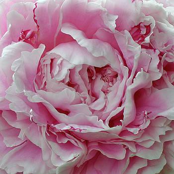 Pretty in Pink by Linda A Waterhouse
