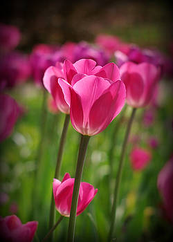 Pretty in Pink by Linda Mishler