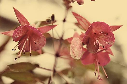 Pretty in Pink by Misty Alger
