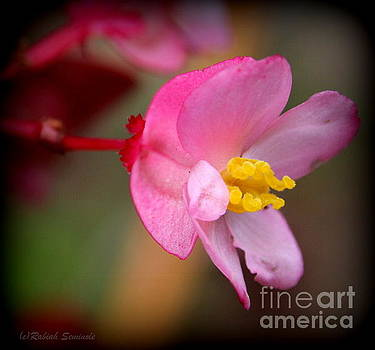 Pretty in Pink by Rabiah Seminole
