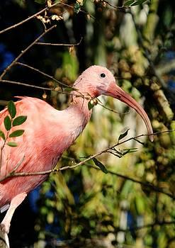 Pretty in Pink by Sheryl Unwin