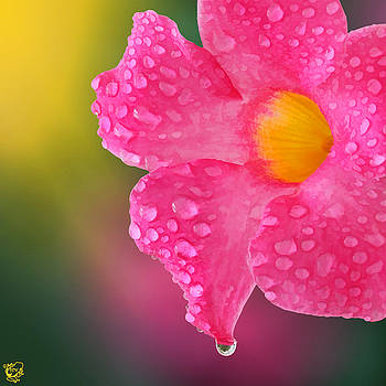 Pretty in Pink by Stephen Kinsey