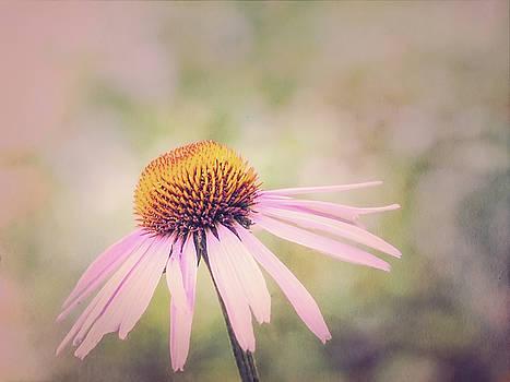 Pretty in Pink by Susan Schmidt
