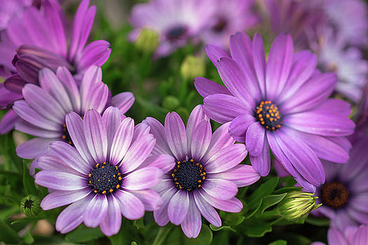 Pretty in Purple by Crystal Hoeveler