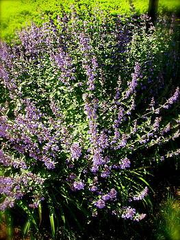 Sherri Williams - Pretty in purple