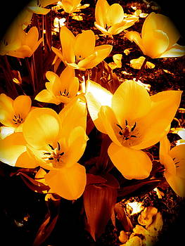 Sherri Williams - Pretty in Yellow