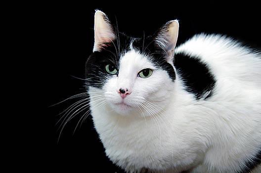 Andee Design - Pretty Kitty Cat 1