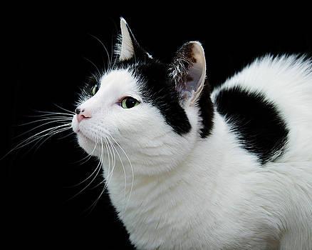 Andee Design - Pretty Kitty Cat 2