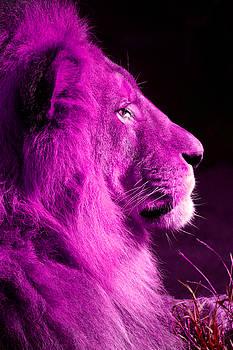 Pretty Kitty in Purple by Lon Casler Bixby