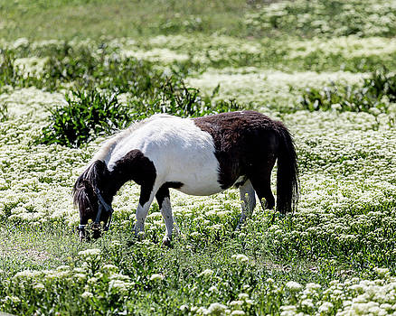 Pretty Painted Pony by James BO Insogna