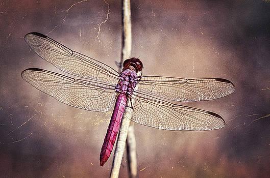 Saija  Lehtonen - Pretty Pink Dragonfly