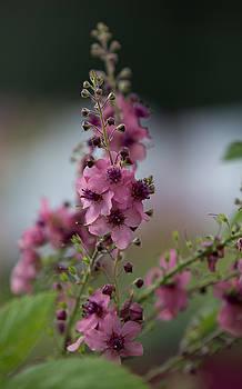 Dee Carpenter - Pretty Pink Flowers