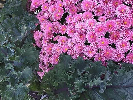 Pretty Pinks by Kay Gilley