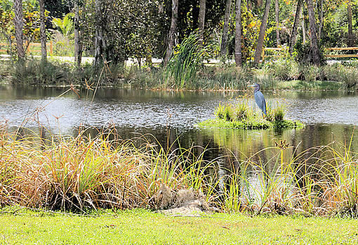 Pretty Pond by Rosalie Scanlon