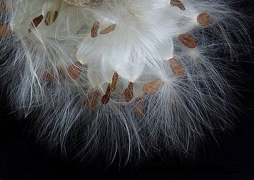 Pretty Seeds -Ugly Weeds by Lori Pessin Lafargue