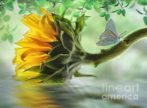 Pretty Sunflower by Nina Bradica