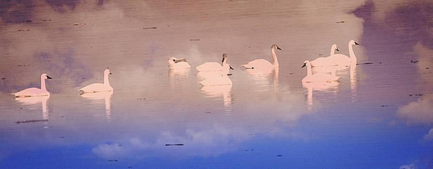Marty Koch - Pretty Swans All In A Ro