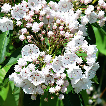 Pretty White Flowers by Pat Turner