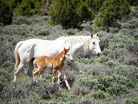Pretty White Mustang Mare with her New Foal - sand  Wash Basin by Nadja Rider