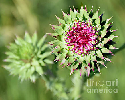 Prickly Beauty by Kathy M Krause
