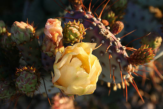 Prickly Buds and Blooms by Marna Edwards Flavell