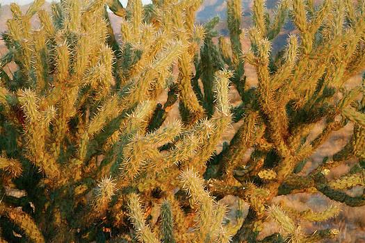 Prickly Cactus by Bonnie Follett