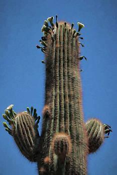 Prickly Flowers by David Kehrli