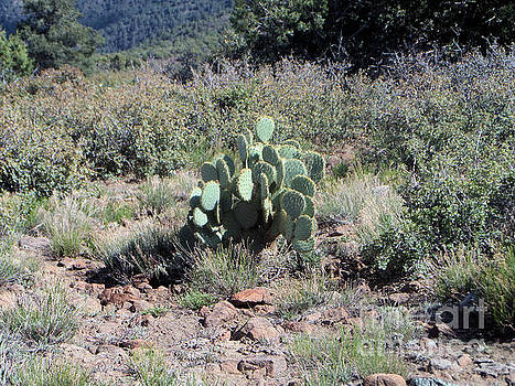 Prickly Pear Cactus by Debbie Wells