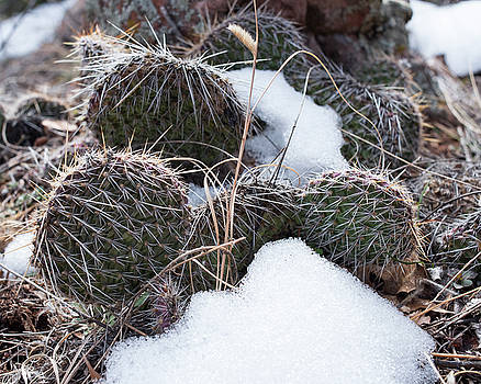 Prickly Pears by Brian Stricker