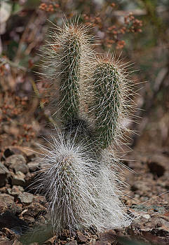 Prickly by Suzanne Gaff
