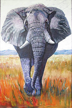 Primo Pachyderm by Thomas Michael Meddaugh