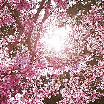 Primrose Flower by Sheila Mcdonald