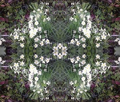 Primrose Paradise by Julia Woodman