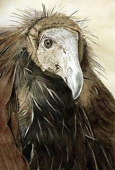 Prince Immature California Condor by Jodi Schneider