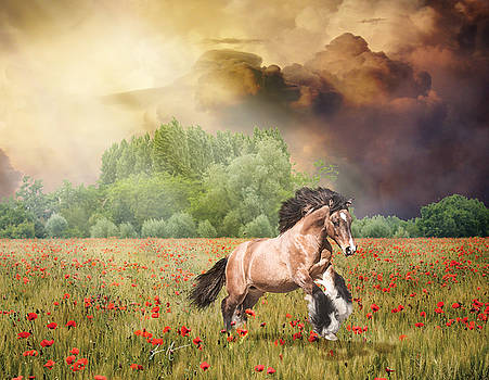 Prince of Poppies... by Jamie Mammano