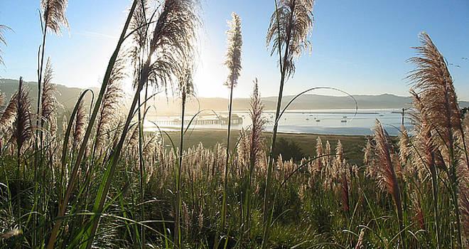 Princeton Harbor. California by Bob Bennett