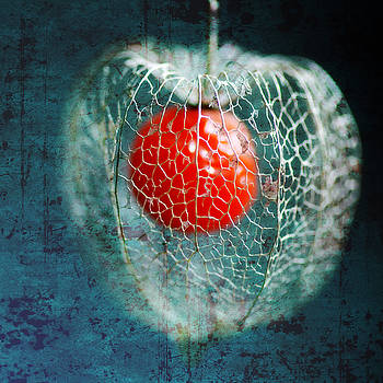 Prison Of Love by Philippe Sainte-Laudy