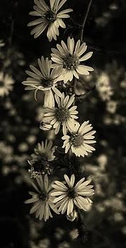 Pristine Petals by Mary Ellen Frazee