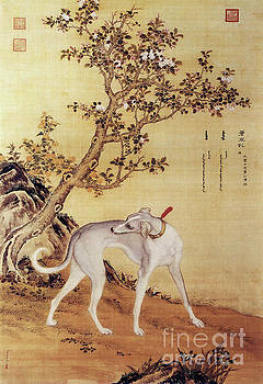 Prized Dogs Chinese Greyhound by Giuseppe Castiglione