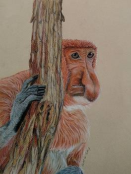 Probiscis Monkey by Joan Mansson
