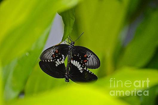 Procreating Butterflies by Stephanie  Bland