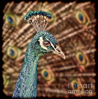 Profile Portrait of a Peacock II by Jim Fitzpatrick