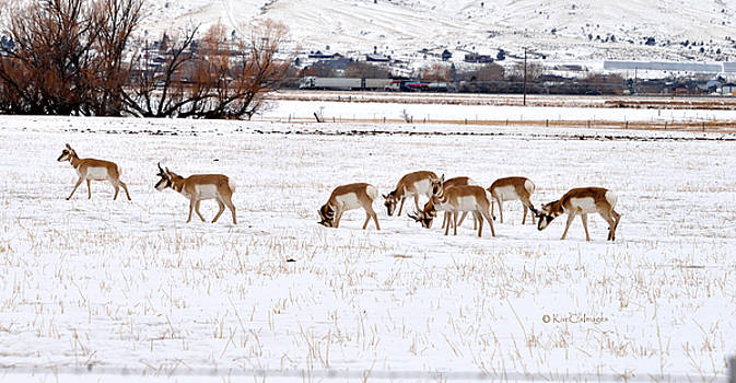 Pronghorn in Snow by Kae Cheatham