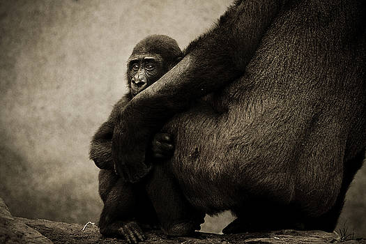 Protection by Animus  Photography