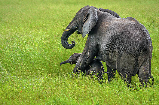 Protective elephant mom by Gaelyn Olmsted