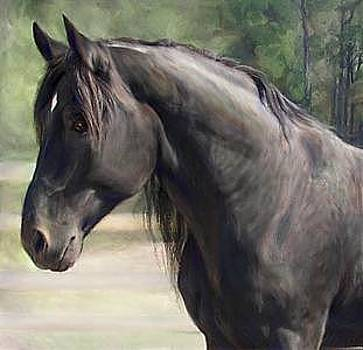 Proud Black Stallion- Oil Portrait by Connie Moses