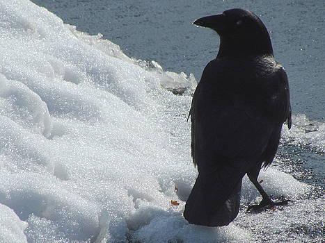 Betty Pieper - Proud Crow