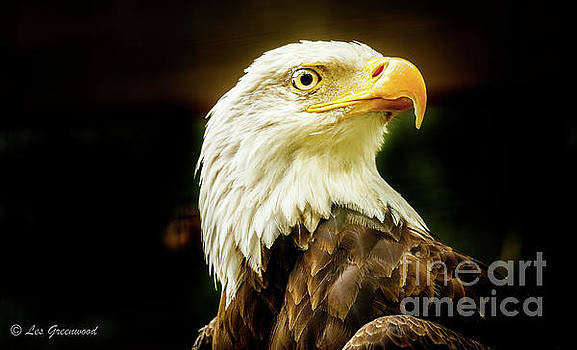 Proud Eagle by Les Greenwood